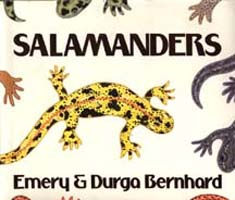 Salamders - Great children's picture book for scientific kids.