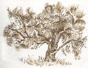 Study of Olive Tree 100dpi