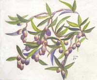 Study of Olives 100dpi - small
