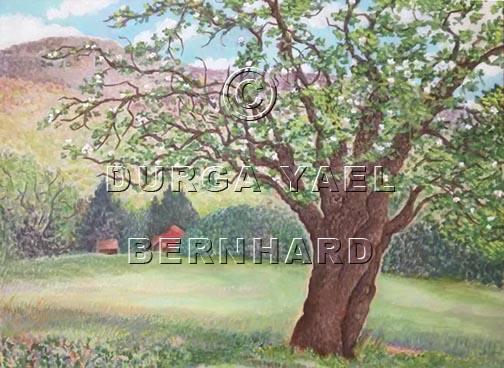 Panther Mountain apple tree 2 72pi