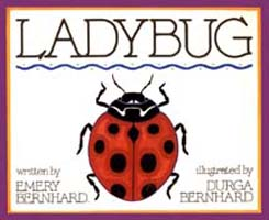 Ladybug - A children's picture book about stray cats and friendly neighbors.