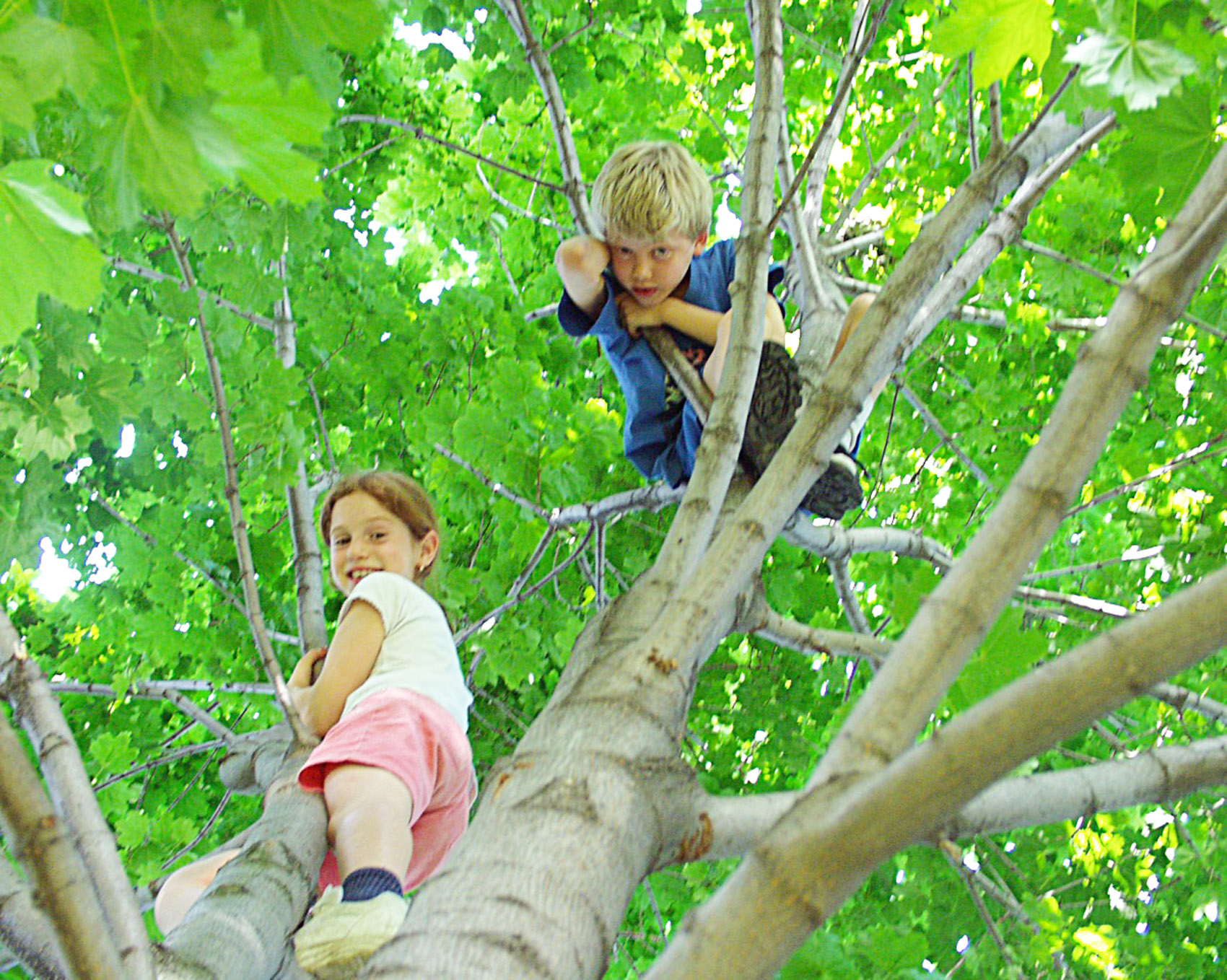 My daughter Eve, age 5 in 1996, climbing a tree with her friend Theo.