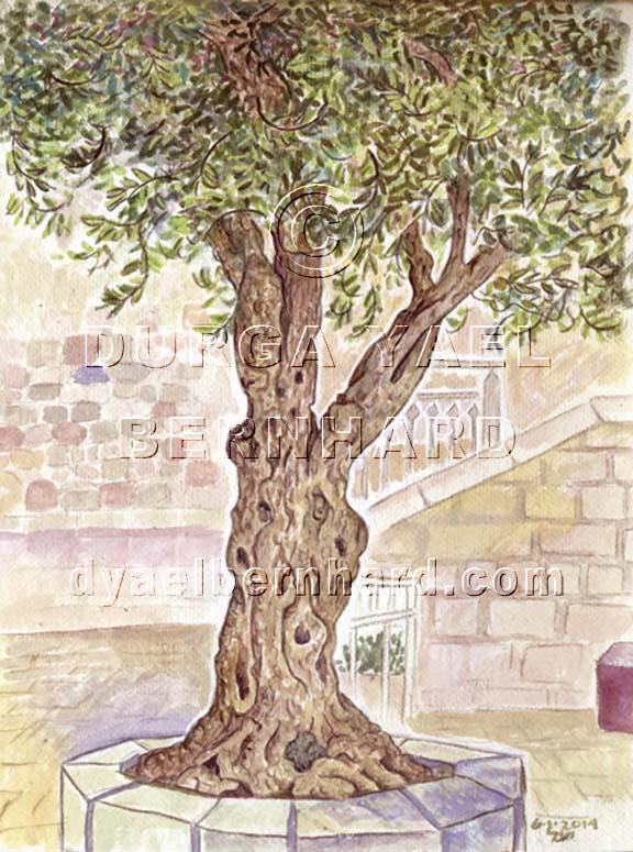Olive Tree Hurva Square