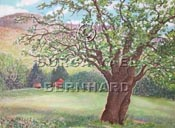 Panther Mountain Apple Tree (2)